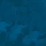 rinaldi, digilio, câmara, vereador, são paulo, paulista, paulistano, política, político, projeto, lei, atividades, transparência, honestidade, partido, vereadores, deputado, senador, presidente, eleições, eleição, votos, pt, psdb, bolsonaro, lula, doria, prefeitura, sp